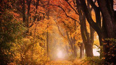 Златна есен в Балкана
